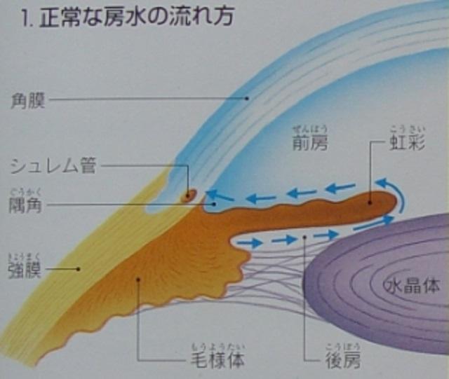 房水の流れ方